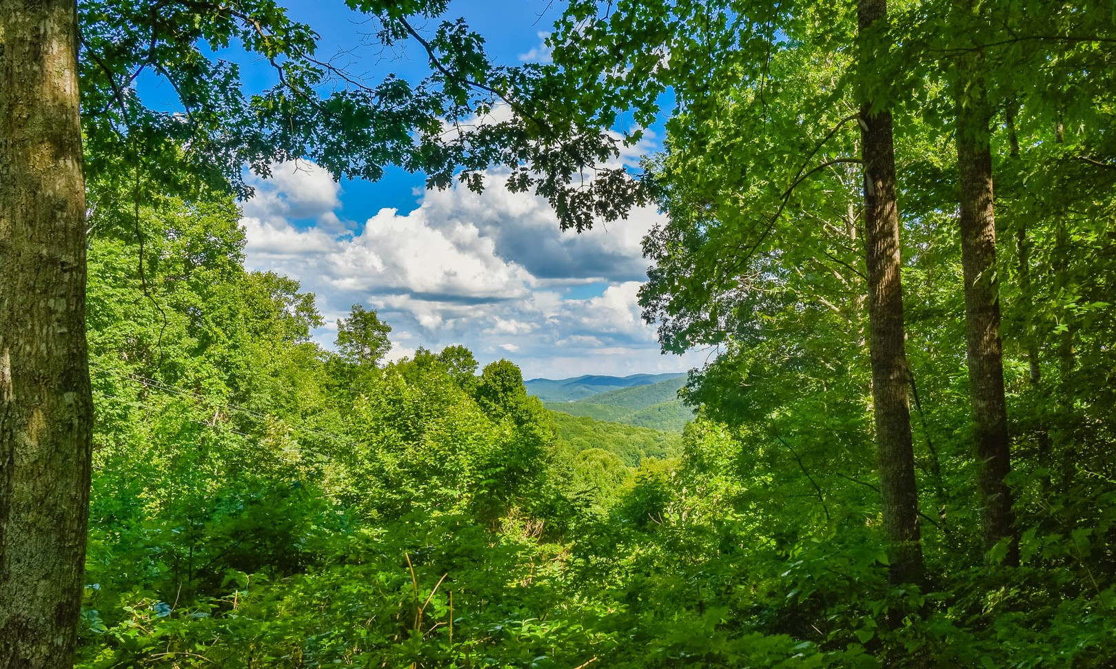 Beautifully Wooded NC Mountain Land Tract