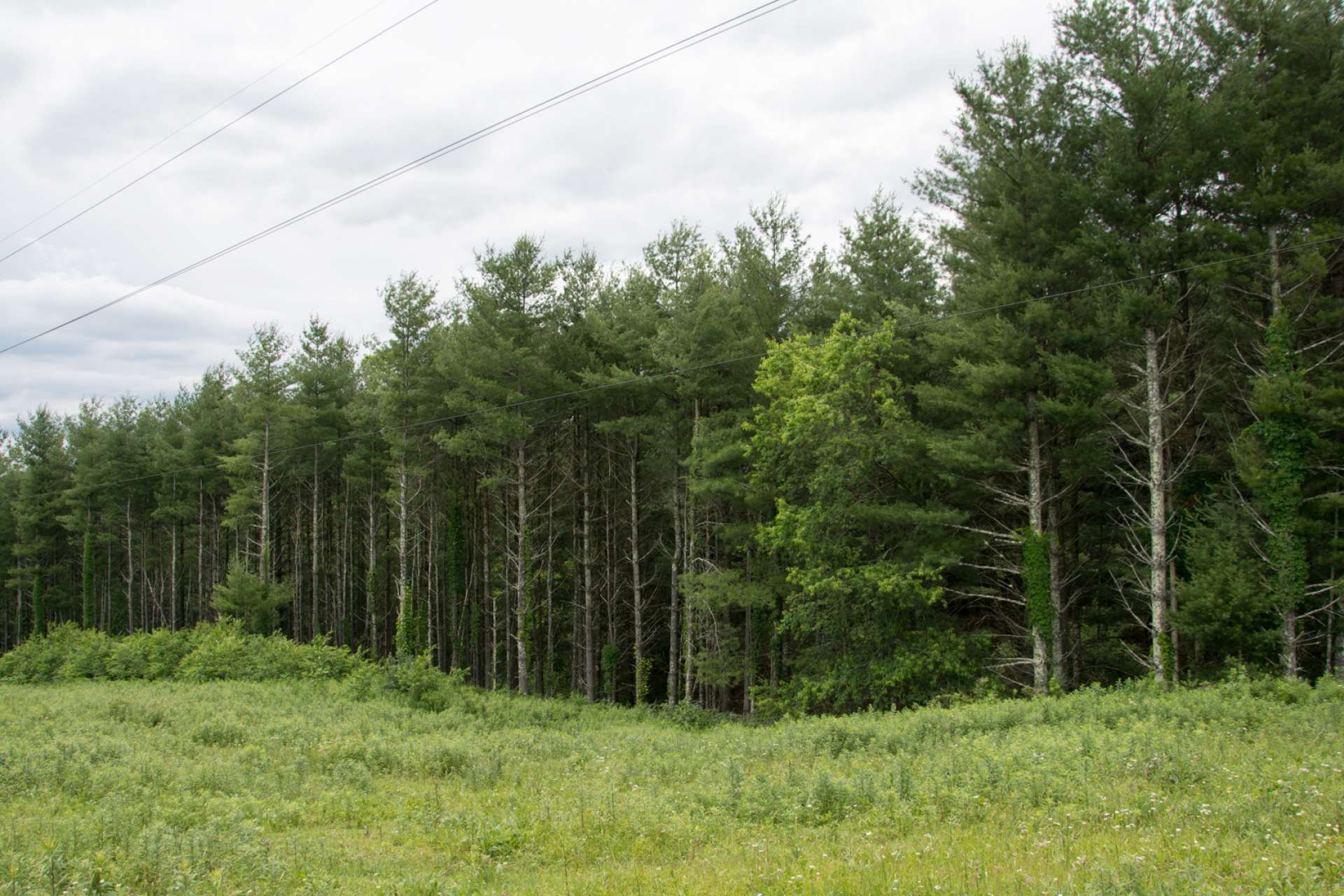 In addition to lush pastures, there is a diverse mixture of native hardwoods and mature pine forest providing timber potential.