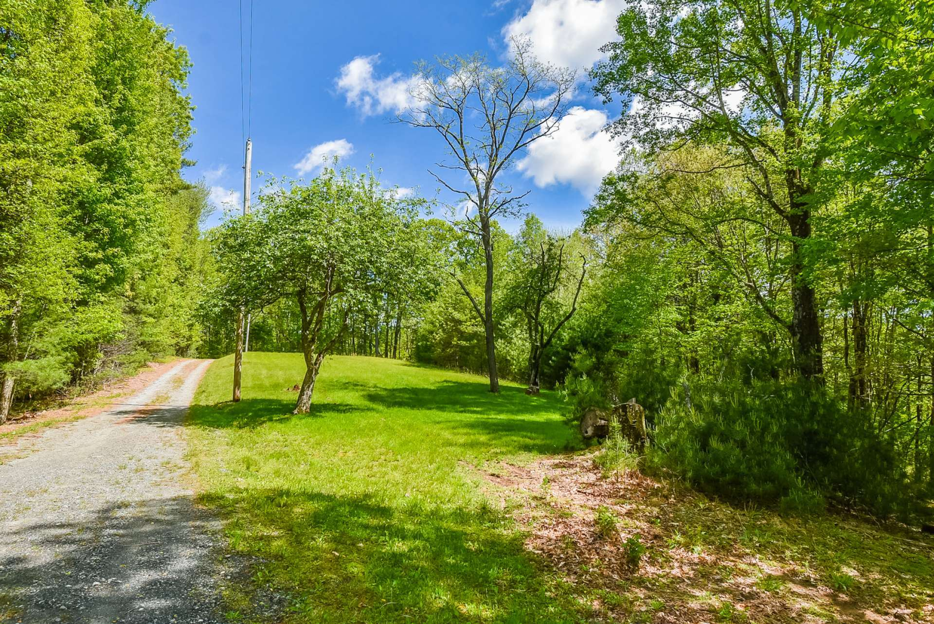 The 16+ acre with an open area with apple trees, surrounded by native hardwoods, evergreens and mountain foliage.