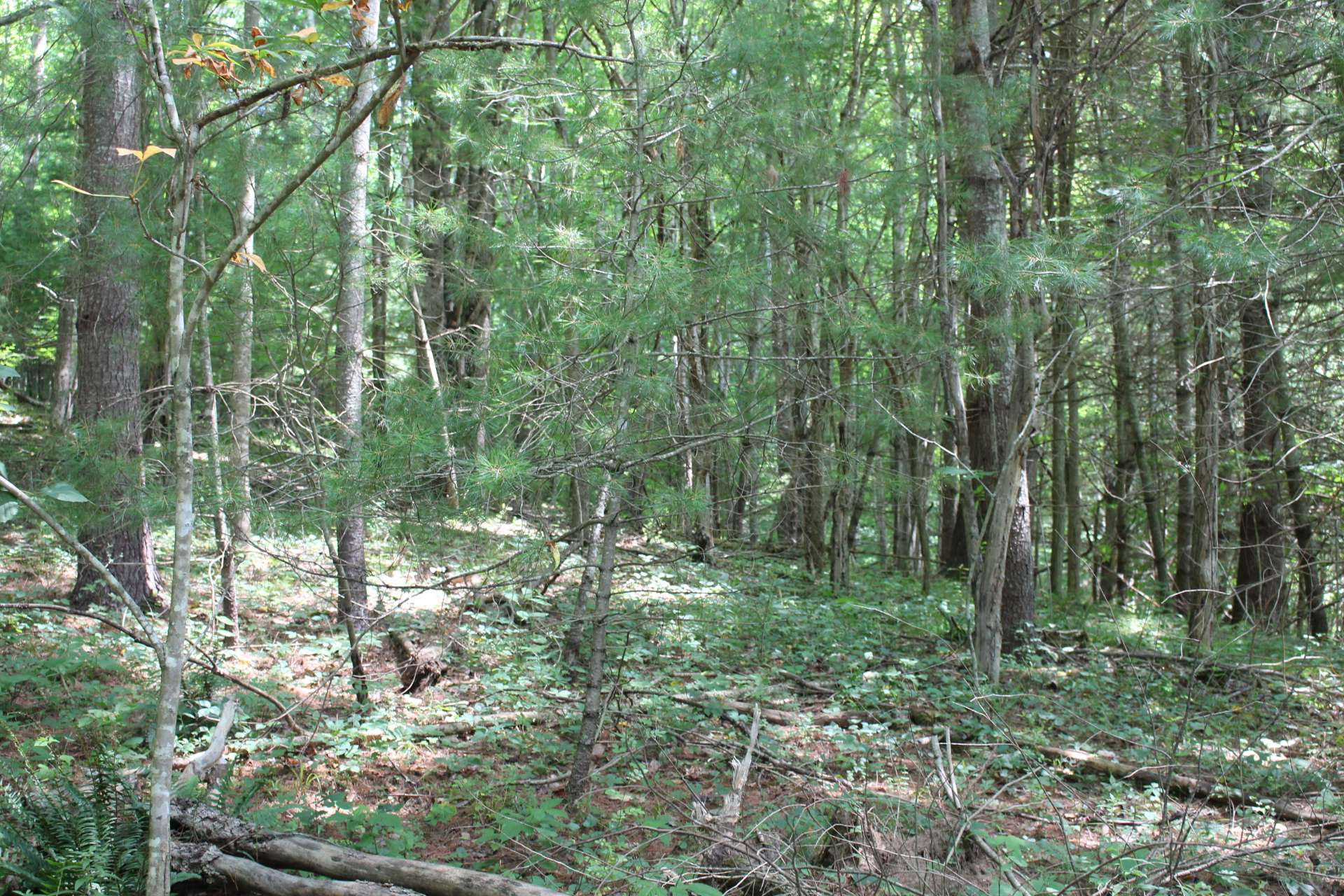 Beautifully wooded homesite with abundant wildlife and lots of Nature.