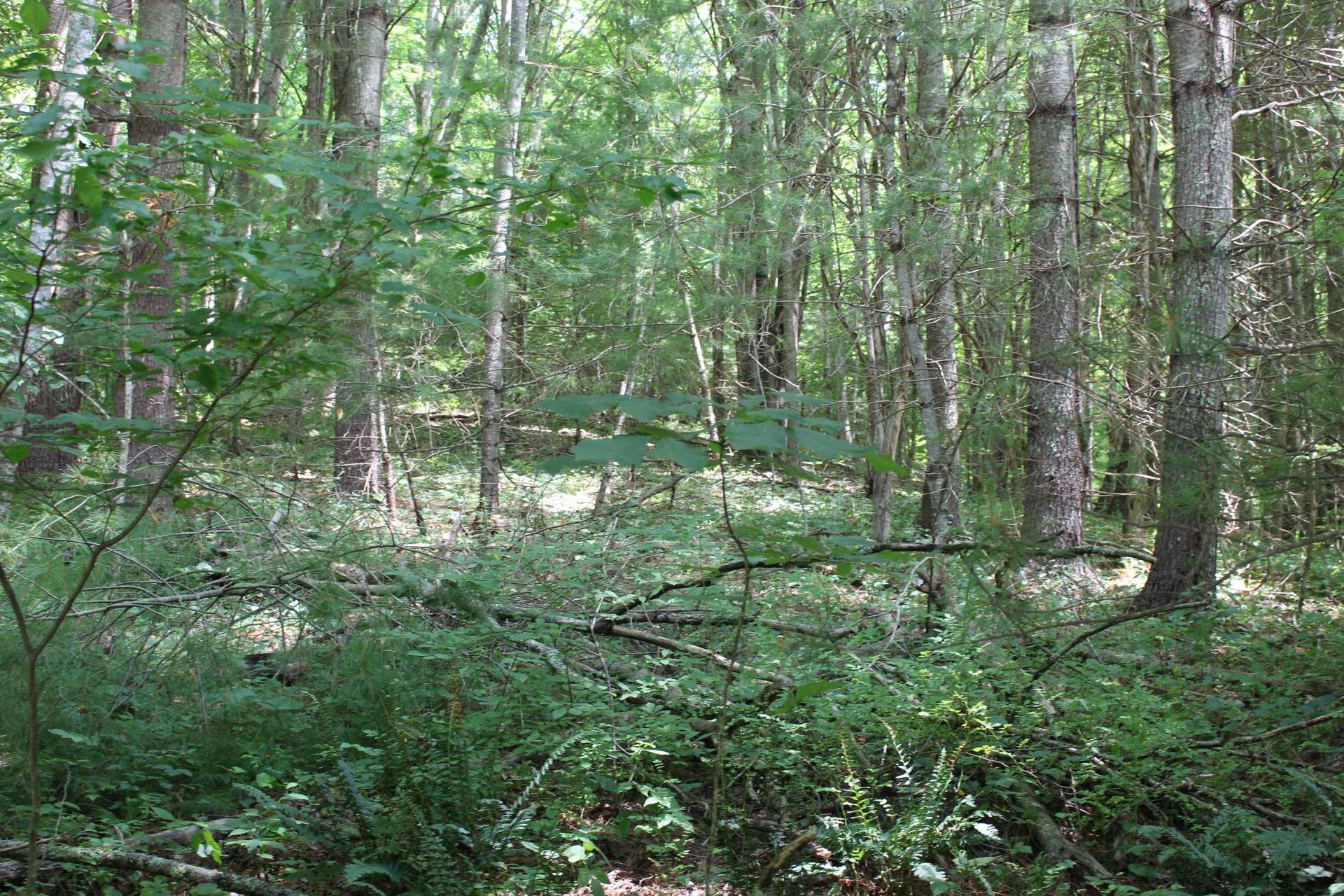 This homesite is in close proximity of the North Fork of the New River and many High Country destinations.