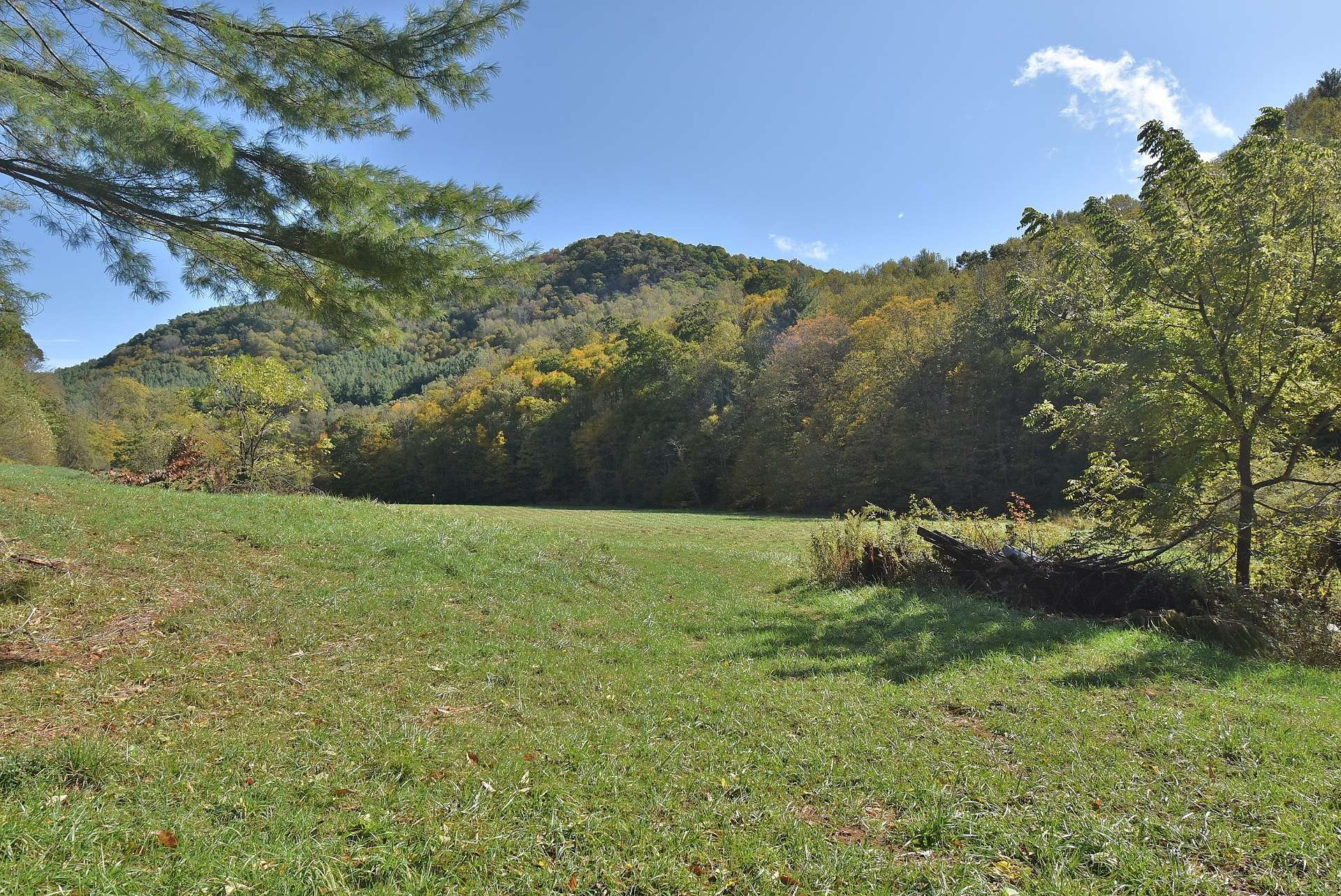 In addition to long level meadows, this 70 acre farm offers gorgeous woodlands with a diverse mixture of hardwoods, evergreens, and native mountain foliage providing timber potential, abundant wildlife, and multiple additional building sites.