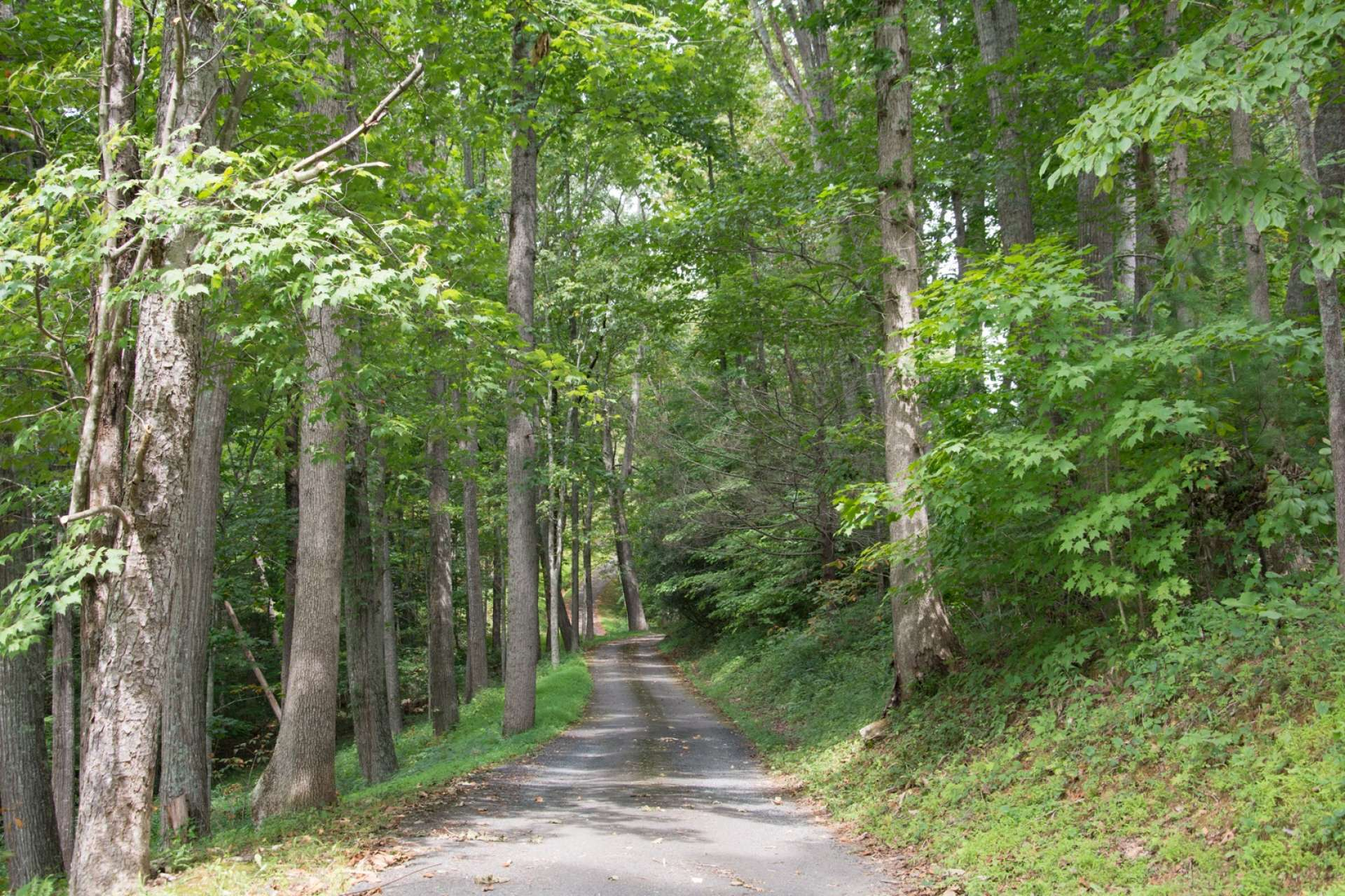A paved drive canopied by native hardwoods and mountain foliage winds its way up to your private mountaintop estate where you can experience leisurely mountain living.