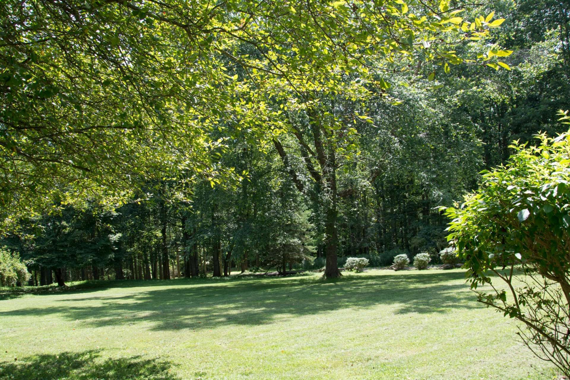 A lush green lawn with large shade trees provide a wonderful space for outdoor games or gardens.