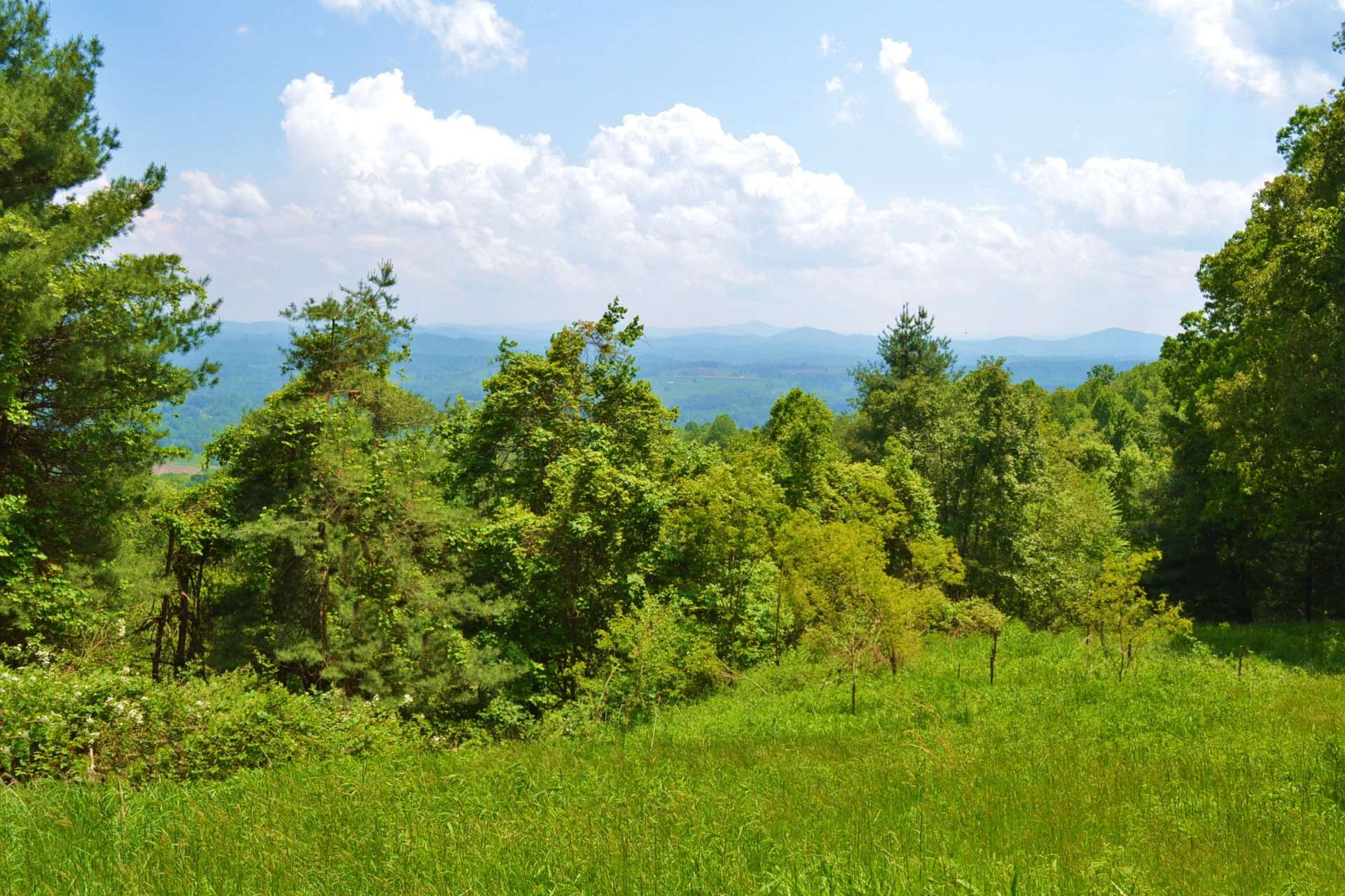You will enjoy the wildlife that call this mountain home. You can almost hear the rustling of the leaves as a young whitetail strolls through the forest that surrounds this property.