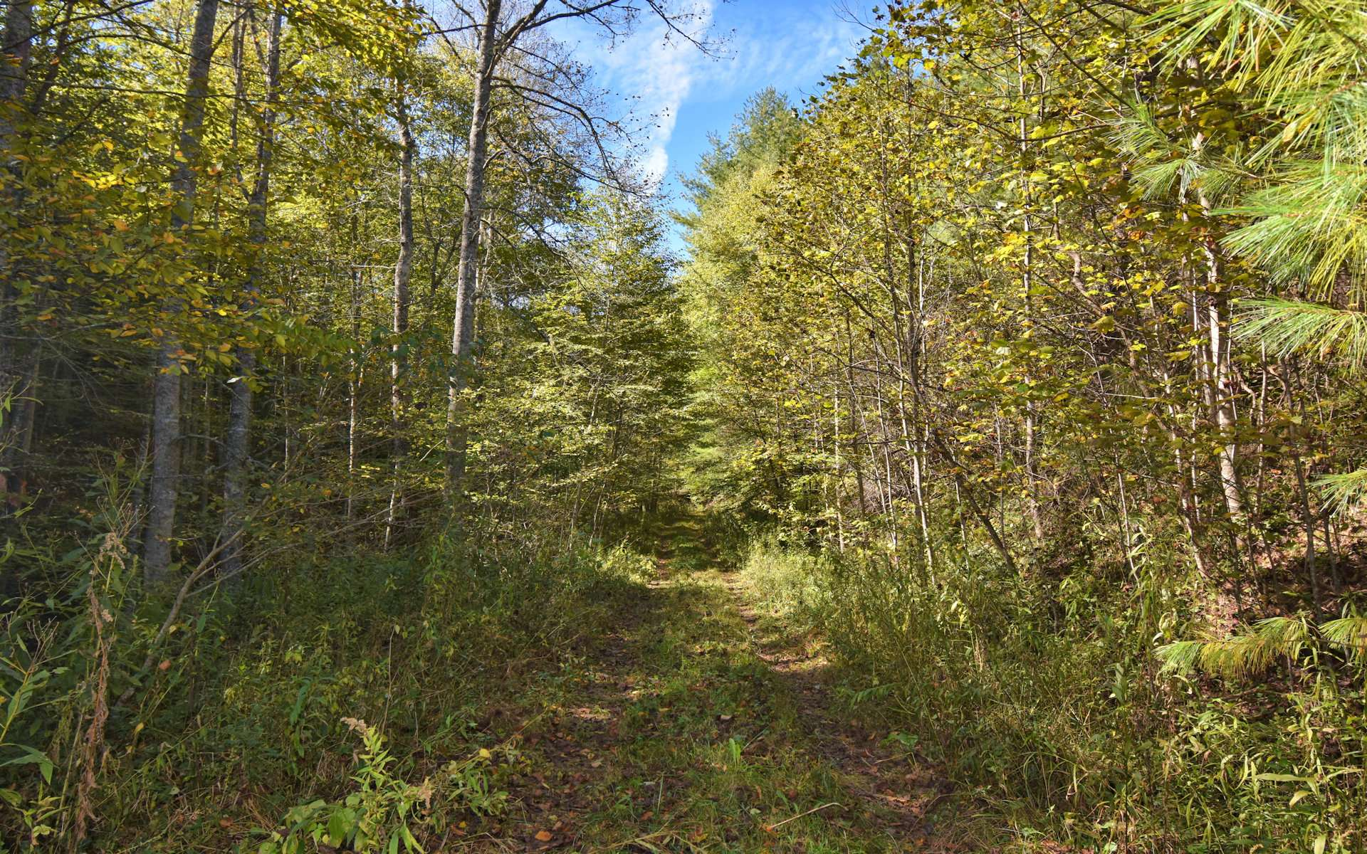 An old farm road directs you through a diverse mixture of native hardwoods, evergreens and mountain foliage to reach multiple potential building sites.