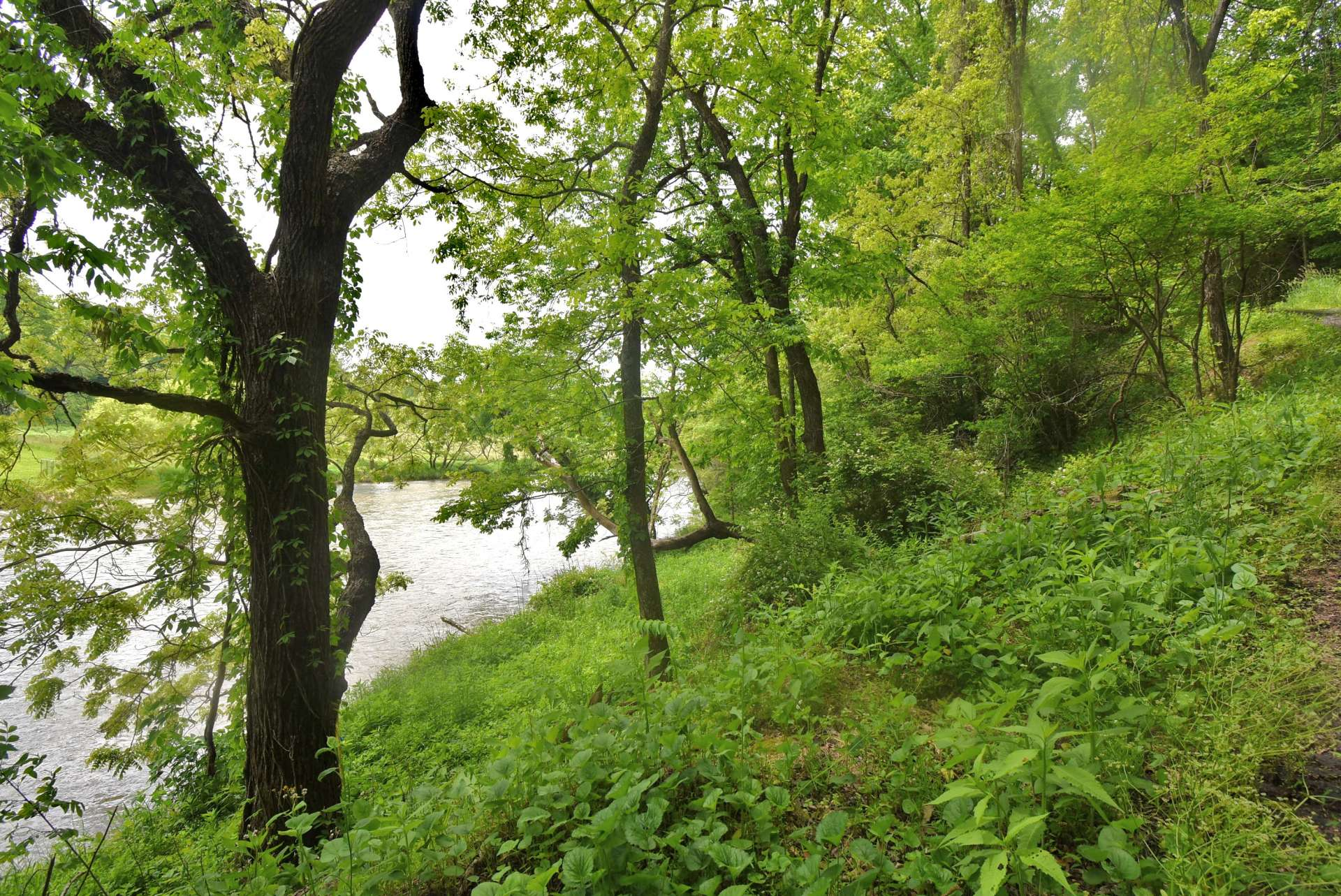 This mountain homesite is between the road and the river for optimum enjoyment of the river.  This riverfront lot is offered at only $29,000.  Call our office today for additional information on listing Q208.