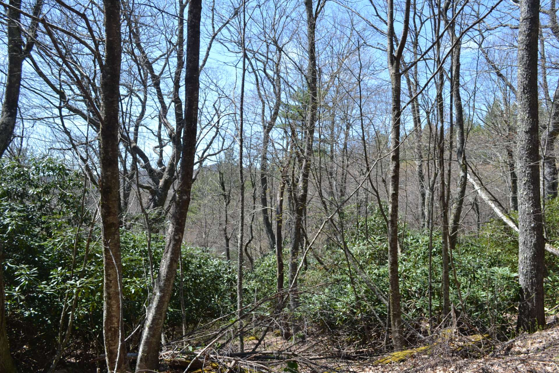 A hunter's paradise, this tract offers vast woodlands with a diverse mixture of hardwoods, conifers and native mountain foliage.  Plenty of opportunities to hike, hunt or just explore on your own private property.