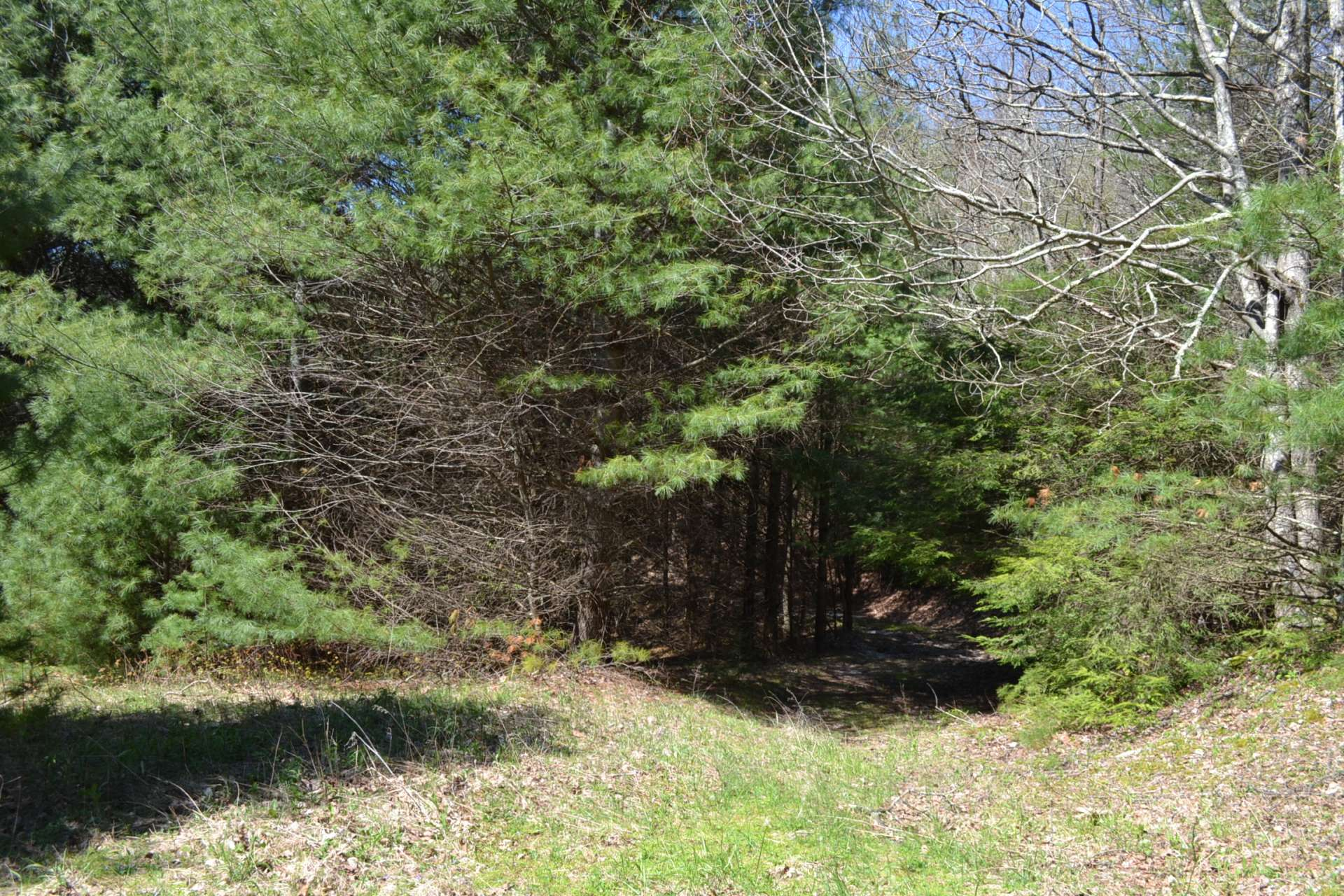This property has long state road frontage.  This is the second access from the road.