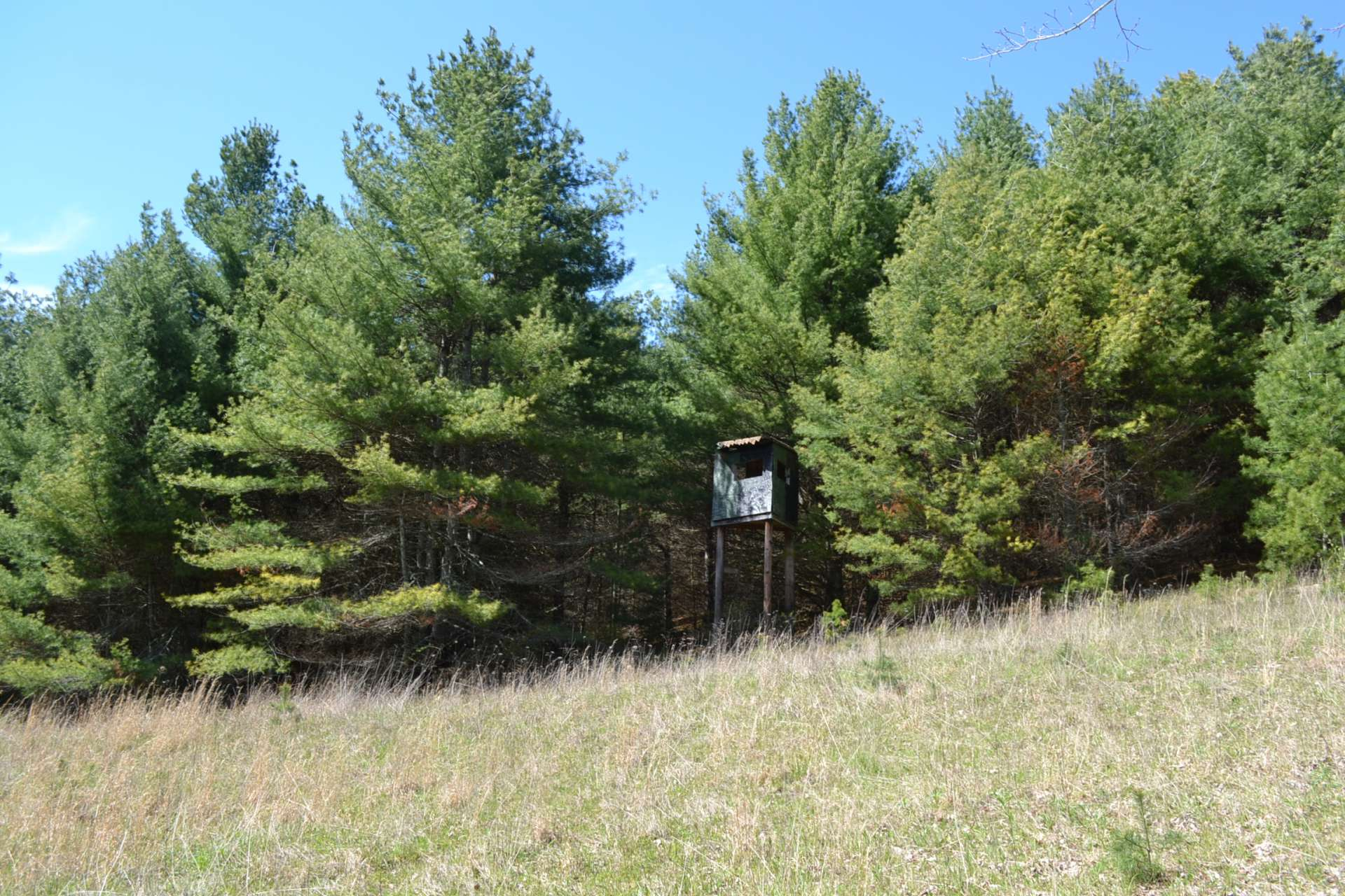 This is where you will find the first of three deer stands in place on the property.  Open fields buffered by woodlands is a great opportunity for bird hunting.