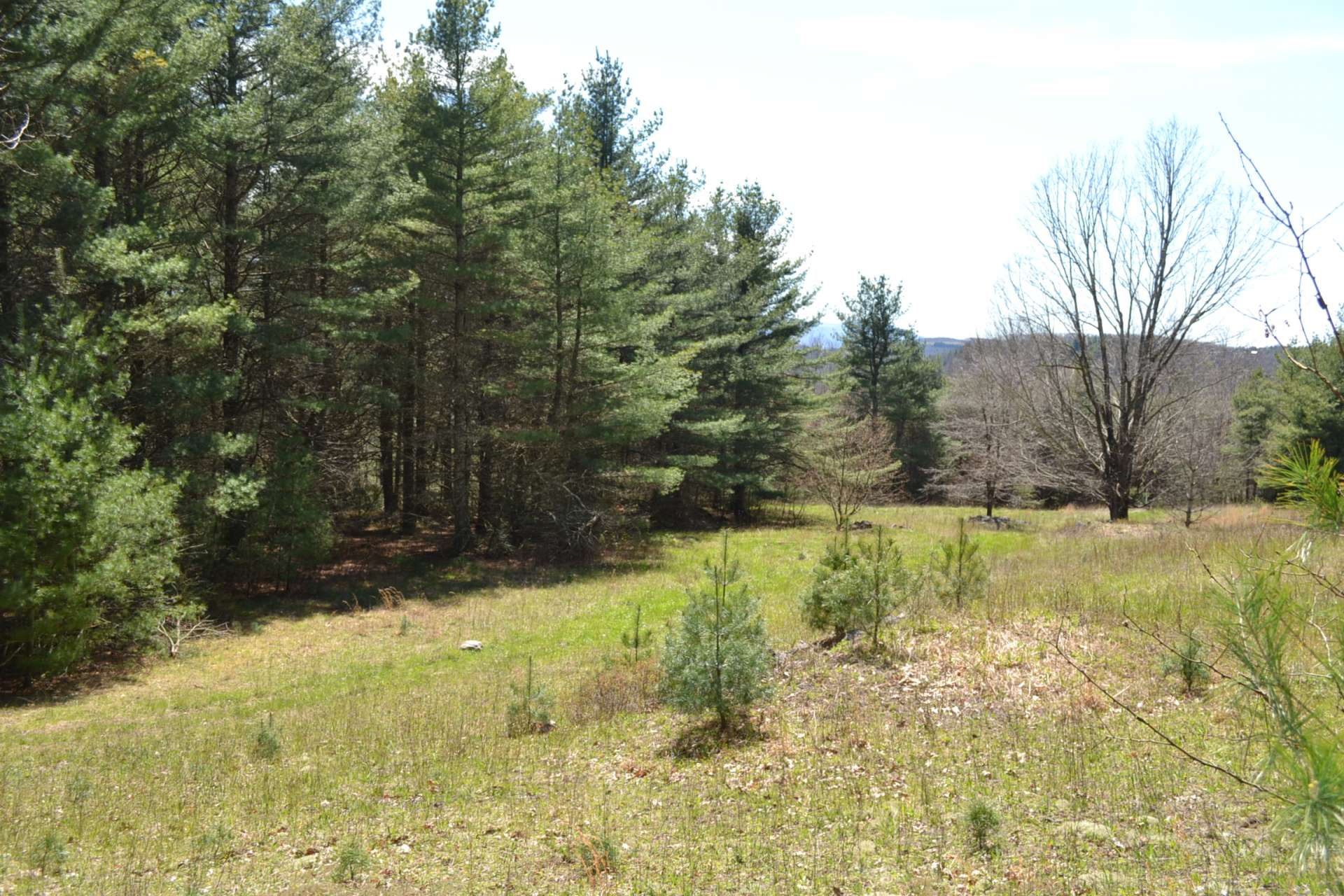 This is the first of three fields on the property, all buffered by serene woodlands.