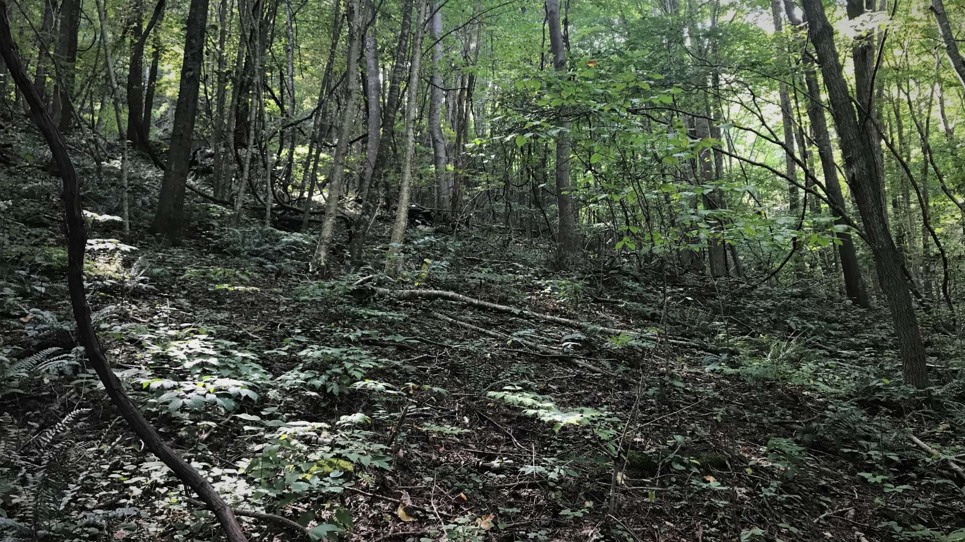 Totally wooded, this tract offers a diverse mixture of hardwoods, evergreens, and mountain foliage.  This tract is also home to a variety of wildlife including whitetail deer, turkey, and bears.